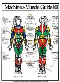 "Machine Muscle Guide/F 11""X16"" - Click for larger picture"