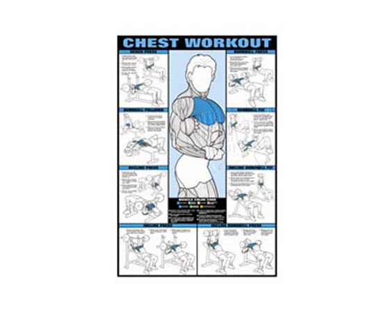 Poster,Chest Workout,Laminated - Click for larger picture