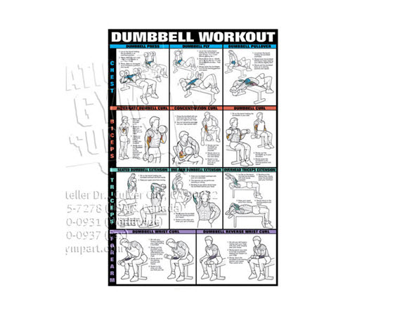 Poster,Dumbbell Workout,Laminated (1of2) - Click for larger picture
