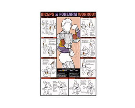 GP530L-Poster,Biceps/ Forearm Workout,Laminated